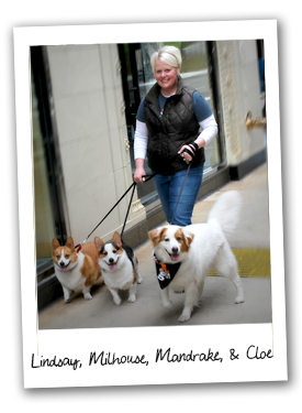 Meet South Loop Top Dog Lindsay and her pups Milhouse, Mandrake, and Cloe.